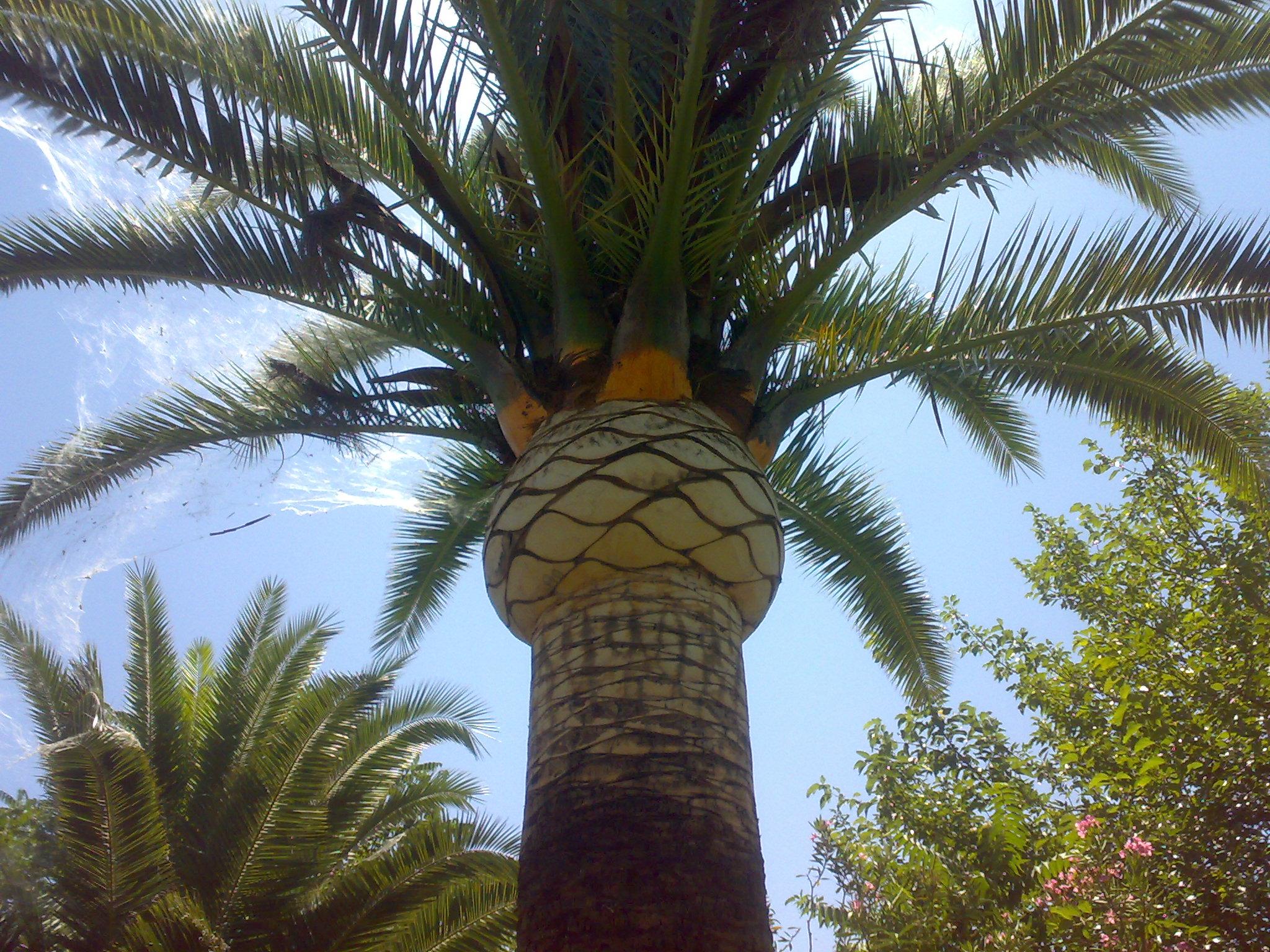 Jardineria tierra santa mantenimiento de jardines - Jardines con palmeras ...