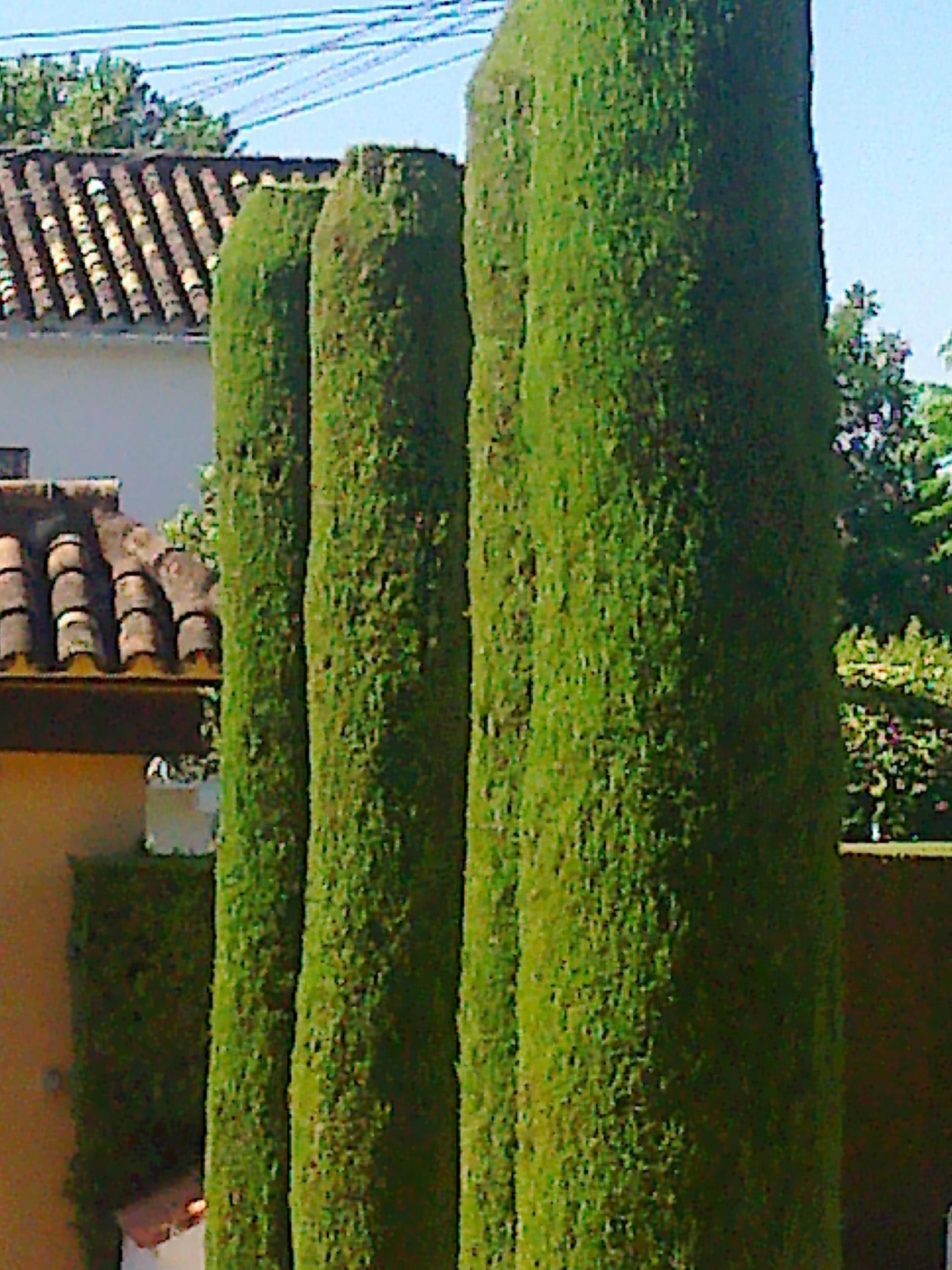 Mantenimiento de jardines jardineria tierra santa for Mantenimiento de jardines